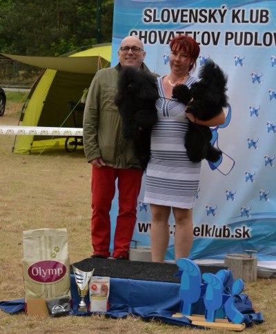 pudelklub-kamennymlyn-jun2017-stupienok (14)